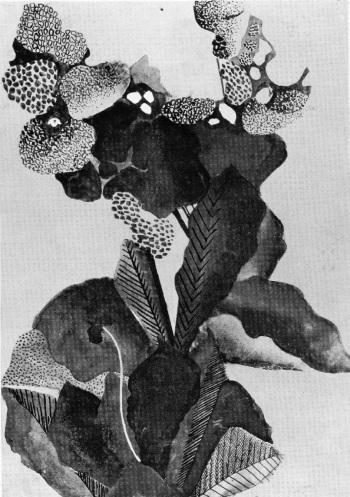 H. Sieves, μελέτη της φύσης με βάση την αντίθεση ανοιχτού/σκούρου, 1934