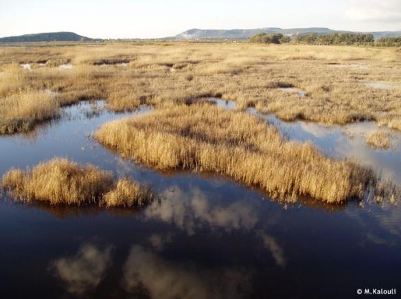 Εικόνα 2: η λιμνοθάλασσα της Γιάλοβας (http://www.ornithologiki.gr/)